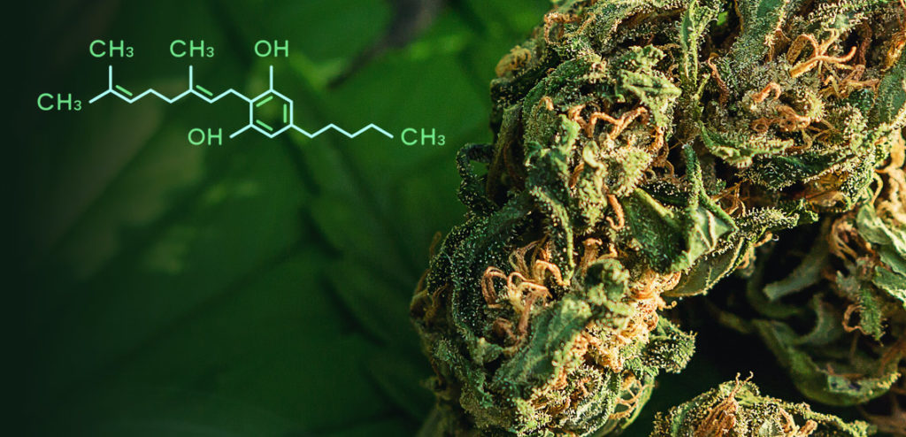 flower of cannabis with cbg